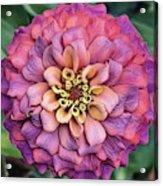 Pink Summer  Acrylic Print