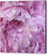 Pinkity Acrylic Print
