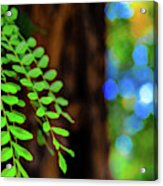 Plants, Trees And Flowers Acrylic Print