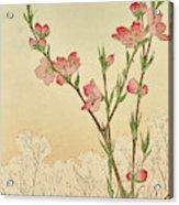 Plum Or Cherry Blossom Acrylic Print