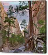 Ponderosa Pines In Slot Canyon Acrylic Print