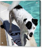 Pool Director Too Acrylic Print