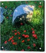 Poppies And Rocks Acrylic Print