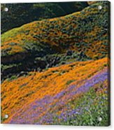 Poppies Bluebells And Rolling Hills Acrylic Print