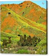 Poppy Hills And Gullies Acrylic Print