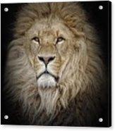 Portrait Of Lion Against Black Acrylic Print