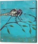 Praying Dragonfly Acrylic Print