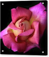 Prelude To A Rose Acrylic Print