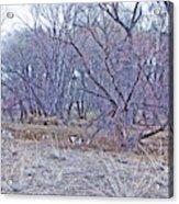 Prescott Arizona Watson Lake Bayou Trees Scrub Water Grasses 3142019 4916 Acrylic Print