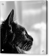 Profile Of A Long Haired Cat In Window Acrylic Print