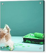Puppy Making Green Paw Prints From Acrylic Print