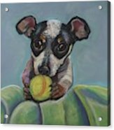 Puppy With Tennis Ball Acrylic Print