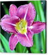 Purple And Yellow Flower Acrylic Print