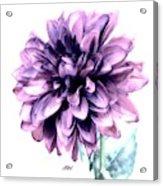 Purple Blend Petals Two Acrylic Print