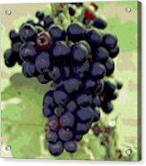 Purple Grape Bunches 19 Acrylic Print