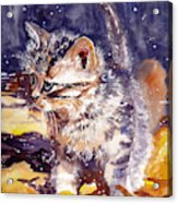 Pussy On A Yellow Blanket Acrylic Print