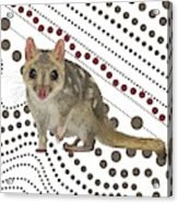 Q Is For Quoll Acrylic Print