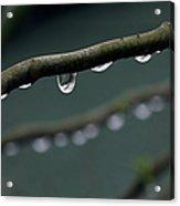 Rain Branch Acrylic Print