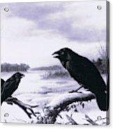 Ravens In Winter Acrylic Print