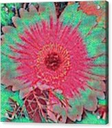 Red And Green Bloom Acrylic Print