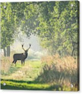 Red Deer In The Forest Acrylic Print