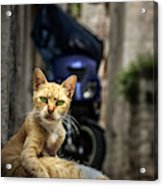 Red Cat With Green Eyes Acrylic Print