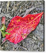 Red Leaf On Green's Hill Acrylic Print