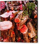 Red Logs Acrylic Print