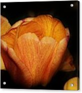 Red Orange Yellow Tulip Acrylic Print