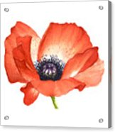 Red Poppy Flower, Image For Prints On Tshirt Acrylic Print