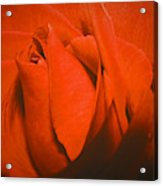 Red Rose Special Acrylic Print