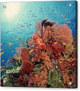 Reef Scenic Of Hard Corals , Soft Acrylic Print
