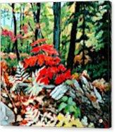 Resilient Maple Acrylic Print
