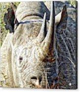 Rhino Zen Acrylic Print