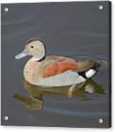 Ringed Teal Acrylic Print