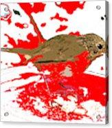 Robin And Snow Acrylic Print