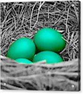 Robin's Nest Selective Acrylic Print