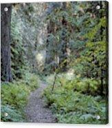 Roosevelt Grove Acrylic Print