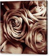 Rose Carmine Acrylic Print