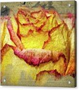 Rose Painting Acrylic Print