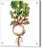 Rutabaga Acrylic Print