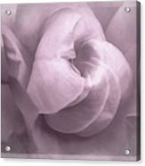 Sacred Rose Acrylic Print