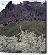 Saddle Rock And Apple Blooms Acrylic Print