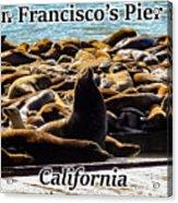 San Francisco's Pier 39 Walruses 1 Acrylic Print