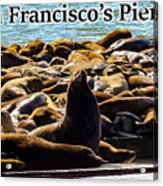 San Francisco's Pier 39 Walruses 2 Acrylic Print