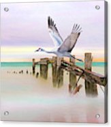 Sandhill Crane And Old Dock Acrylic Print