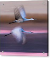 Sandhill Cranes Flying Over Lake Acrylic Print