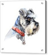 Schnauzer. Portrait Of A Dog. Set With Acrylic Print