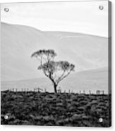 Scottish Highland Tree In Black And White Acrylic Print