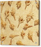 Sea Shell Scroll Acrylic Print